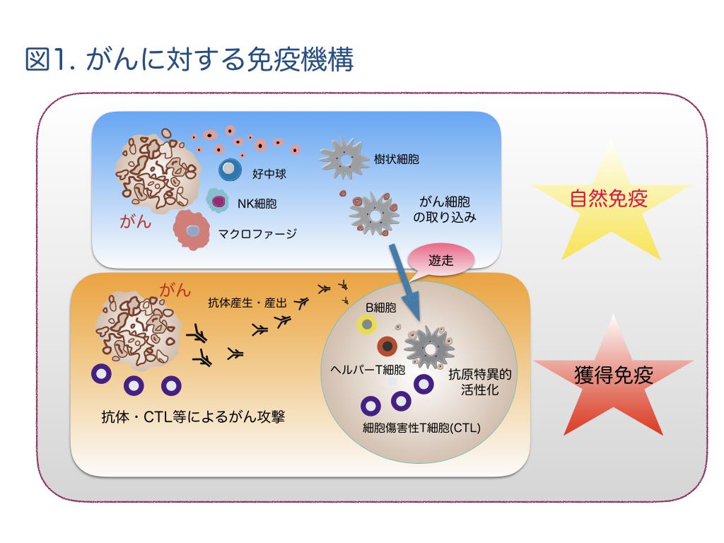 キラー 細胞 ナチュラル